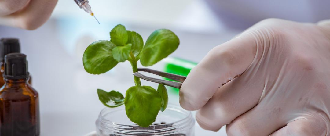 El sector de la biotecnología ofrece grandes ganancias para la humanidad y para los inversores